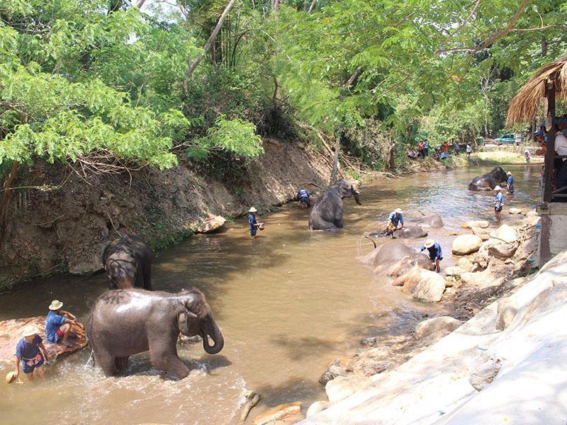 大象在工作(半天)。