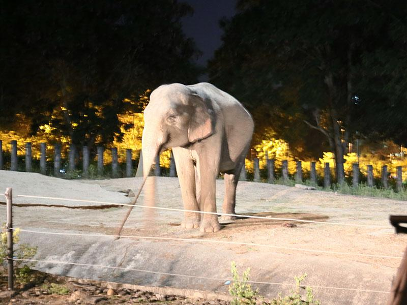 清迈夜间野生动物园(夜间旅程)。